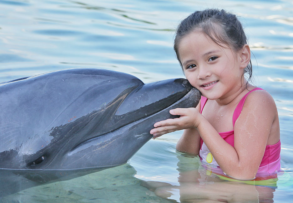 swimming with a dolphin in subic bay