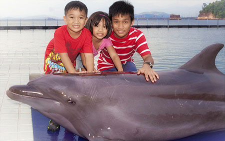 photos with dolphins info