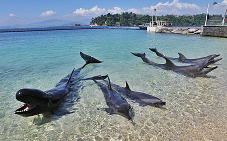 dolphins-in-lagoon